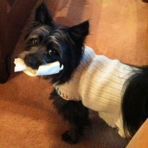 Got a bone and a sweater for my birthday